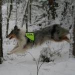 Sök i skogen